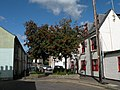 Rowan tree in Argyle Street - geograph.org.uk - 1463510.jpg