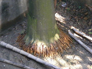 Fibrous root system