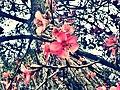Ružičasto ,) - panoramio.jpg