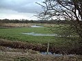 Rushton Common - geograph.org.uk - 99761.jpg