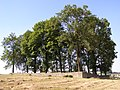 Ryglice cmentarz wojenny.jpg