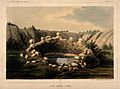 Sacred Spring, Zuñi, New Mexico. Coloured lithograph. Wellcome V0014651.jpg