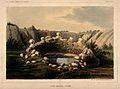 Sacred Spring, Zuñi, New Mexico. Coloured lithograph. Wellcome V0014651.jpg