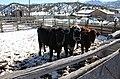Salida Livestock Commission Company.JPG