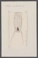 Salpa nephoidea - - Print - Iconographia Zoologica - Special Collections University of Amsterdam - UBAINV0274 092 08 0049.tif