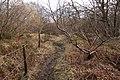 Sandford Wood - geograph.org.uk - 1194333.jpg