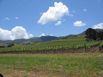 Santa Ynez Valley - A typical vineyard in the Santa Ynez Valley