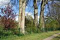 Schleswig-Holstein, Lutzhorn, Naturdenkmal 49-03 NIK 2913.JPG