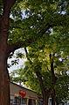 Schnurbäume4.jpg