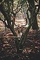 Serene elk (Unsplash).jpg