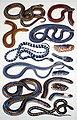 Serpentes.kígyók.jpg