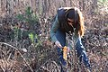 Service botanist Mara Alexander collects Georgia aster seeds (8057076027).jpg