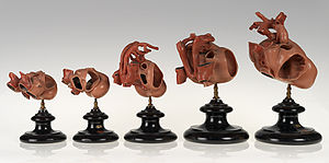 Rabbit - Set of wax models showing development of the rabbit heart