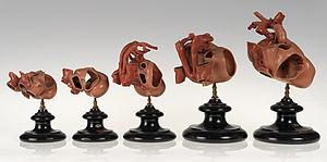 Rabbit - Set of wax models showing development of the rabbit heart