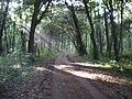 Shafts of Sunlight on the Track towards Holkham Hall - geograph.org.uk - 309923.jpg