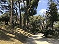Shukkei Garden 5.jpg