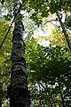 Sibbald Point Provincial Park IMG 3098 (15382276461).jpg
