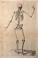 Skeleton with right hand raised, seen from behind. Line engr Wellcome V0008022EL.jpg