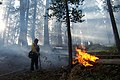Slide wildfire used for resource benefit, Sequoia and Kings Canyon National Parks, 2002 (6fda2d6f-8442-4e6d-979a-4ccdffbad999).jpg
