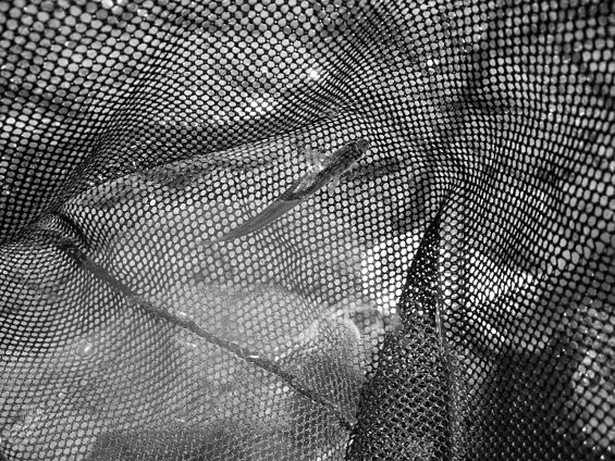 Commons photo challenge 2017 april nets voting for Small fish net