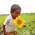 Smily flowers.jpg