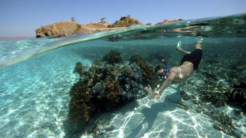 Snorkeling Beaches In Big Island