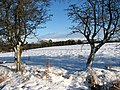 Snow-covered cattle pasture - geograph.org.uk - 1626639.jpg