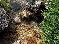 Soča - panoramio (34).jpg