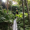 Soldier Creek Walk, Lord Howe Island, NSW, Australia.jpg