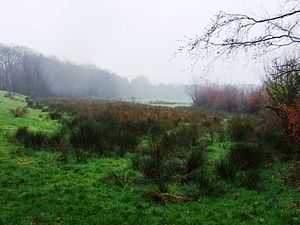 River Culm - Image: Source of the River Culm
