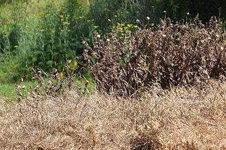 Herbicide - Weeds controlled with herbicide