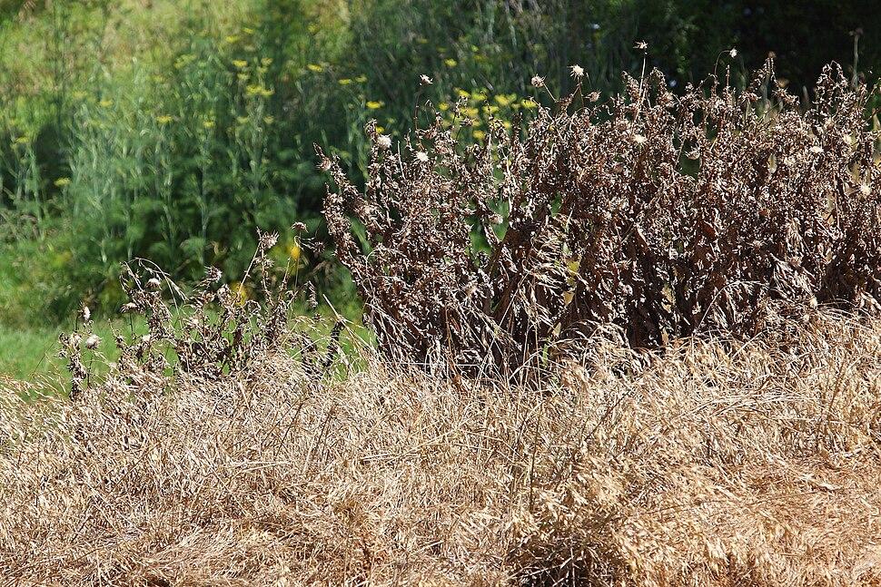 Sprayed weeds