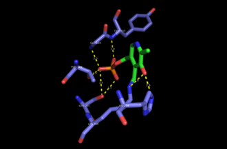 Serine C-palmitoyltransferase - Key active site residues of serine C-palmitoyltransferase that interact with PLP. Generated from 2JG2.