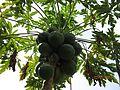 St ignatium been Photo By Raju Odedra Mo . 07698787895 - panoramio.jpg