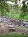 Starr-110307-2923-Fraxinus uhdei-habitat tables and gulch-Kula Botanical Garden-Maui (24711357239).jpg