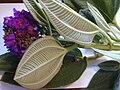 Starr 020815-0060 Tibouchina multiflora.jpg