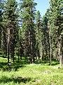 Stazerwald - panoramio - schoella.jpg