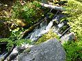 Steinbach, NP Bayerischer Wald.jpg
