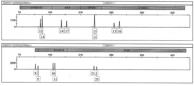 marcadores geneticos microsatélites