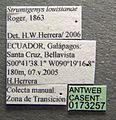 Strumigenys louisianae casent0173257 label 1.jpg