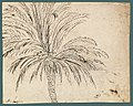 Study of a Palm Tree (recto); Mountain Landscape (verso) MET 2002.39a.jpg