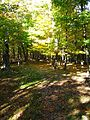 Sun-shining-through-trail - West Virginia - ForestWander.jpg