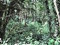 Sunlit wood - geograph.org.uk - 1376796.jpg