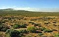 Suráfrica, Namaqualand 35.jpg