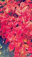 Svln4821 ordubad resimleri fotolari sekilleri photos pictures autumn fall payiz sonbahar colorful.JPG