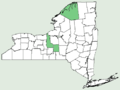 Symphyotrichum firmum NY-dist-map.png