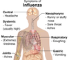 Symptoms of influenza png whitebackground.png