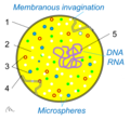 Tế bào sơ khai - protobiont.png