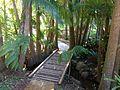 Tamborine Mountain Botanic Gardens 02.JPG