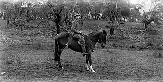 Thomas Griffith Taylor - Thomas Griffith Taylor on a horse, Canberra, 1913 Image: National Library of Australia